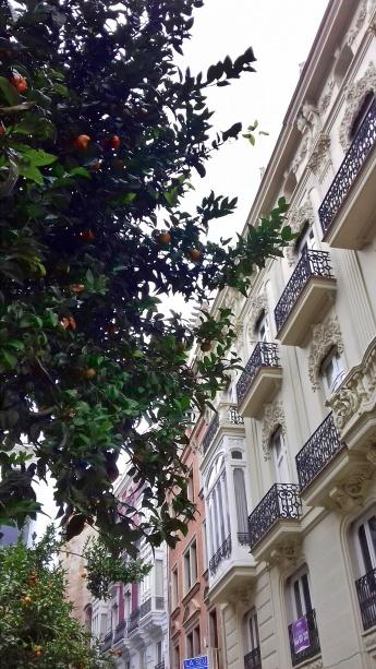 agrumi valencia (1)