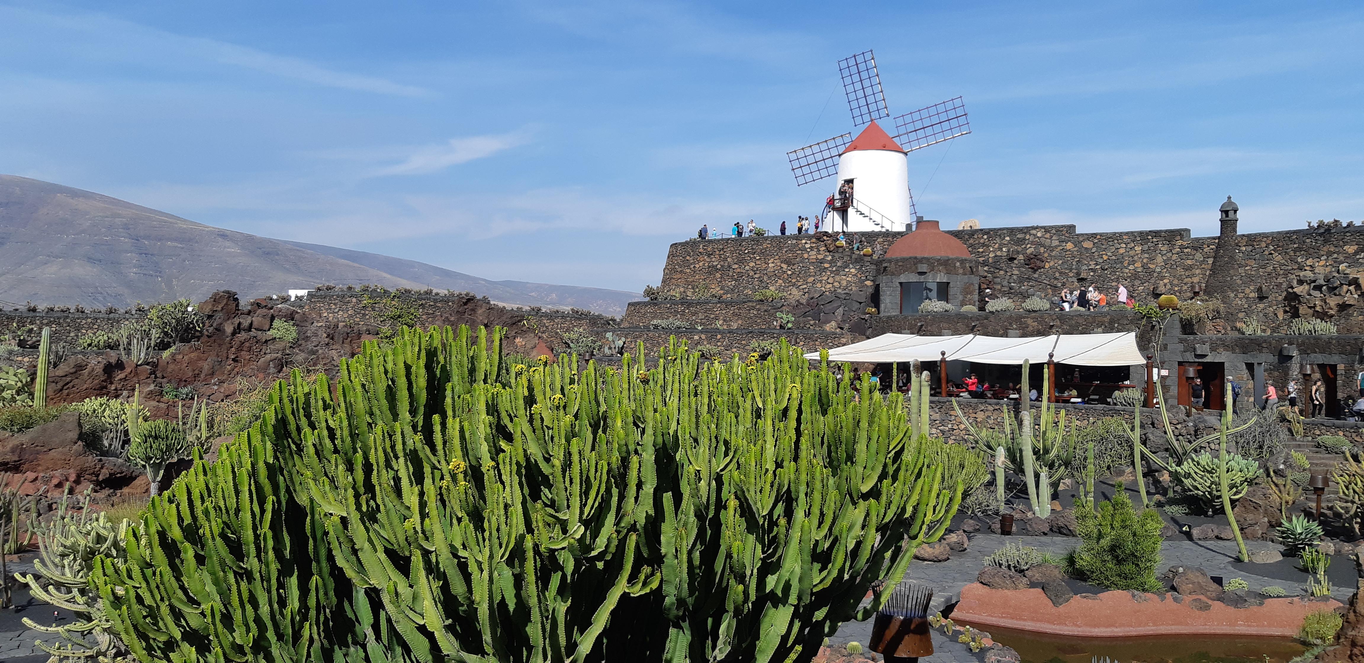 jardine de cactus - lanzarote