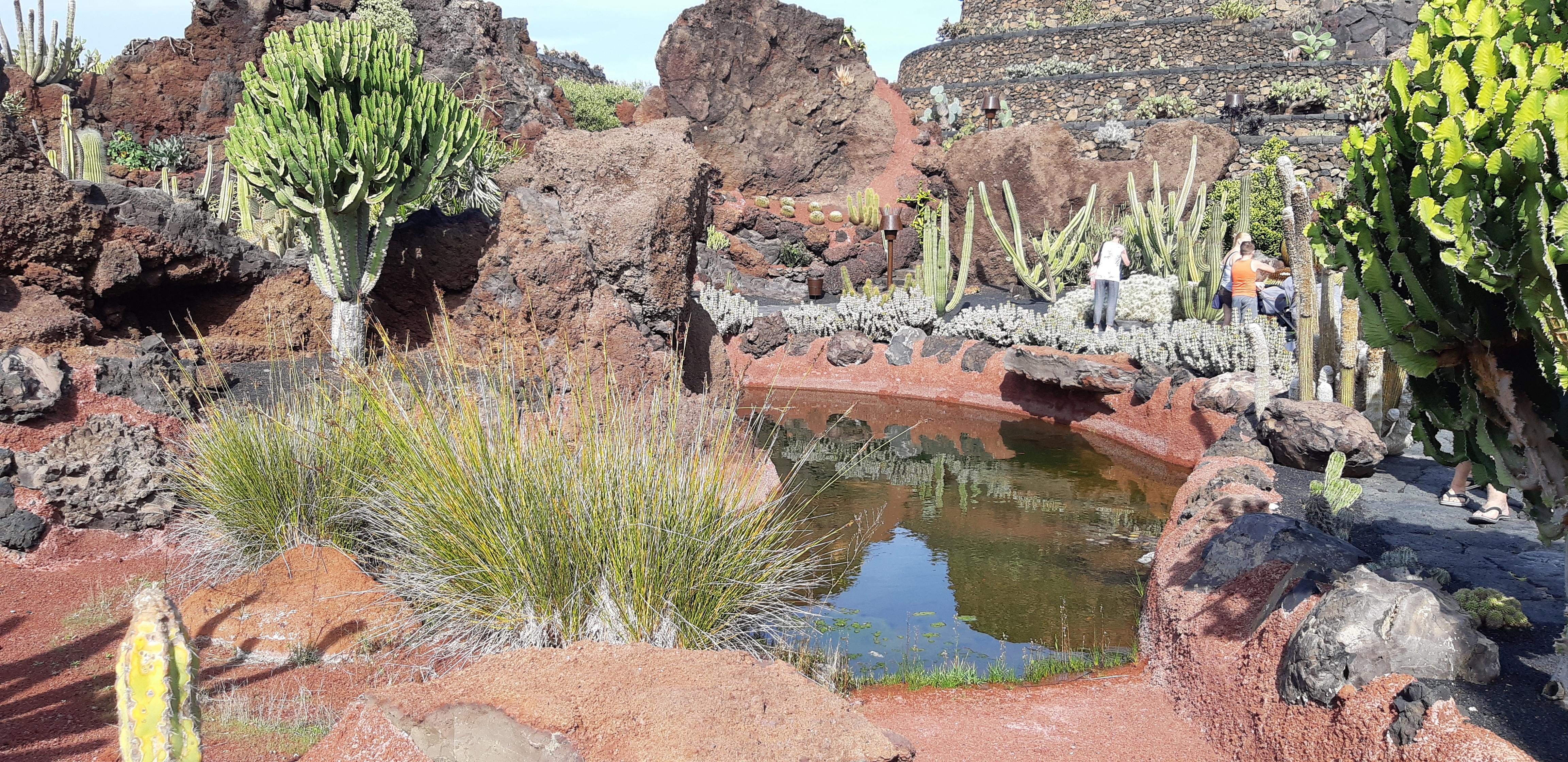 Lanzarote _ Jardin de Cactus_10.jpeg