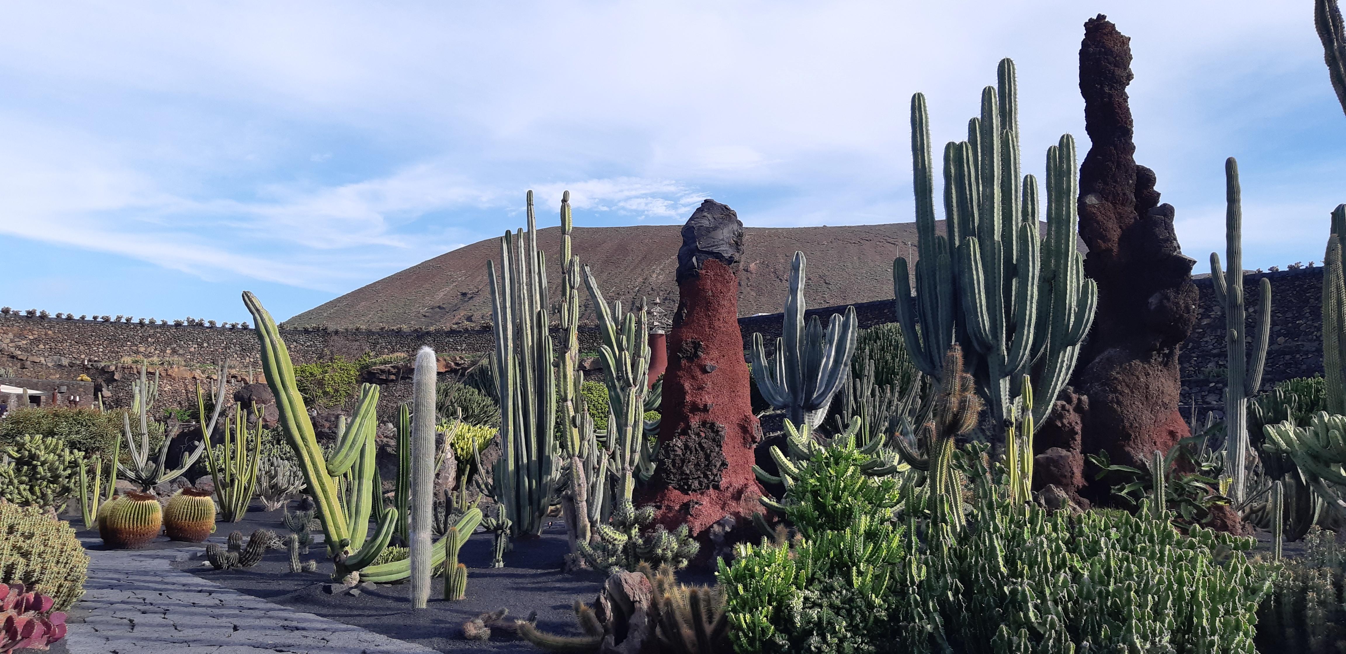 Lanzarote _ Jardin de Cactus_19.jpeg