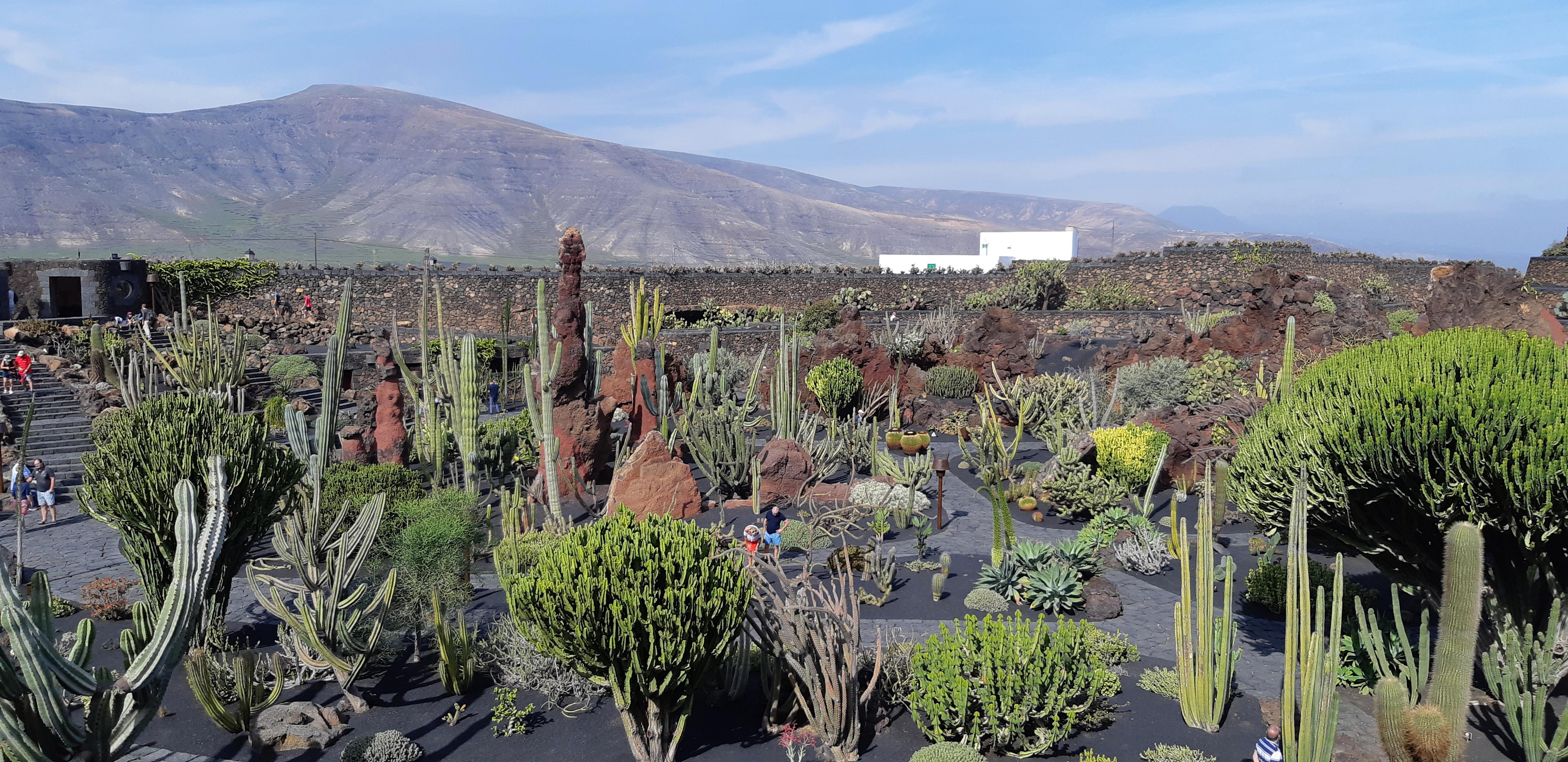 Lanzarote _ Jardin de Cactus_2.jpeg