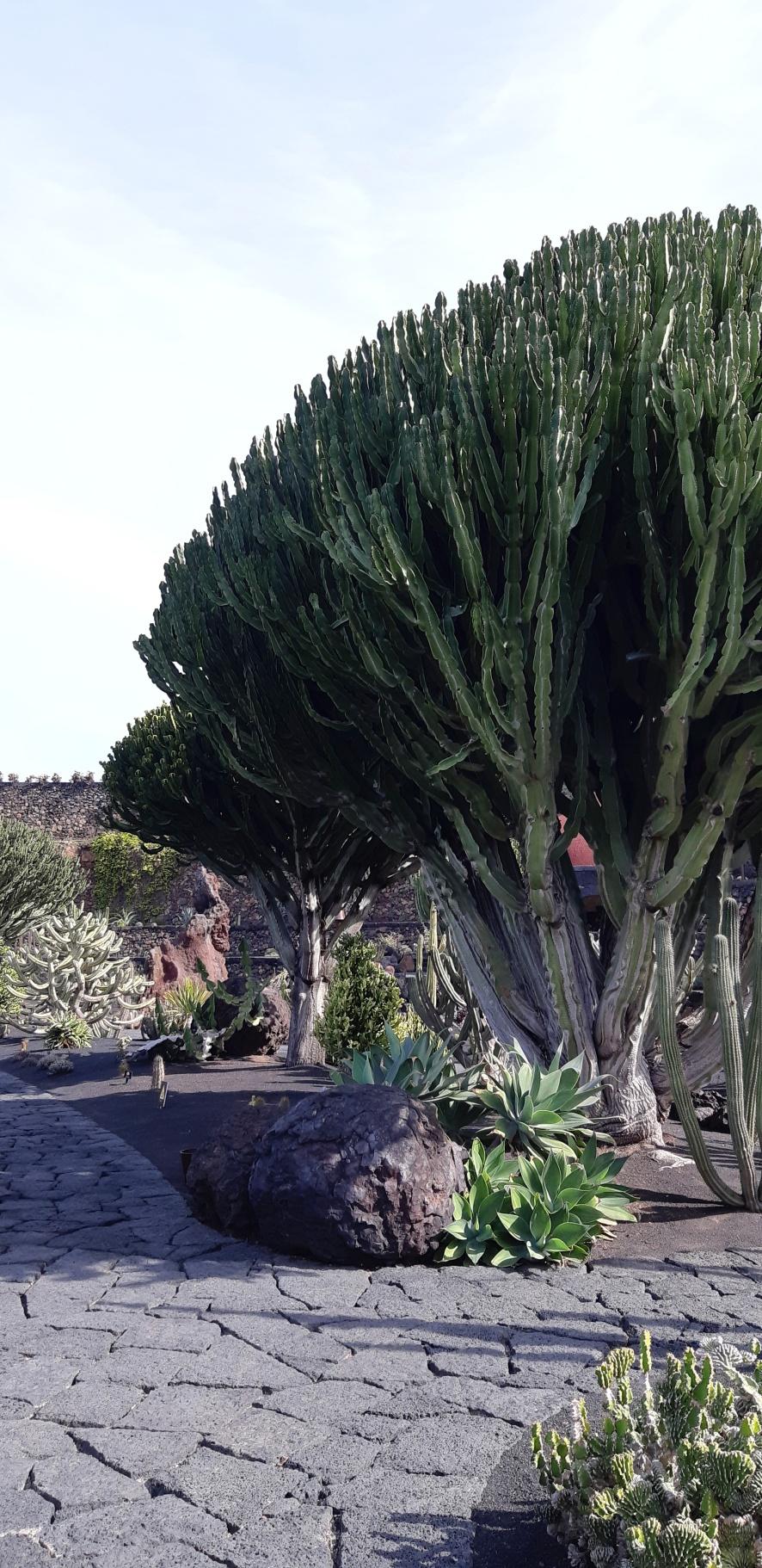 Lanzarote _ Jardin de Cactus_7.jpeg