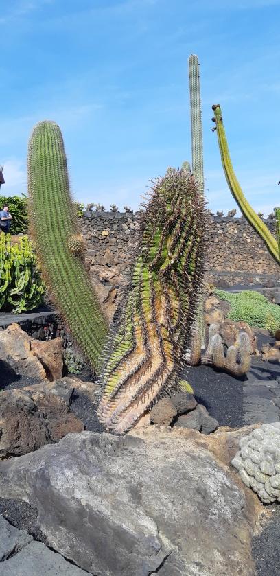 Lanzarote _ Jardin de cactus