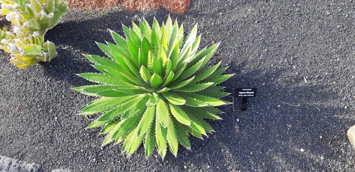 Lanzarote _Jardin-de-cactus-15