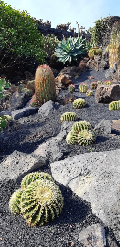 Lanzarote-Jardin-de-Cactus-1