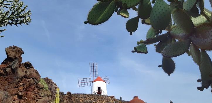 Lanzarote-Jardin-de-Cactus-11