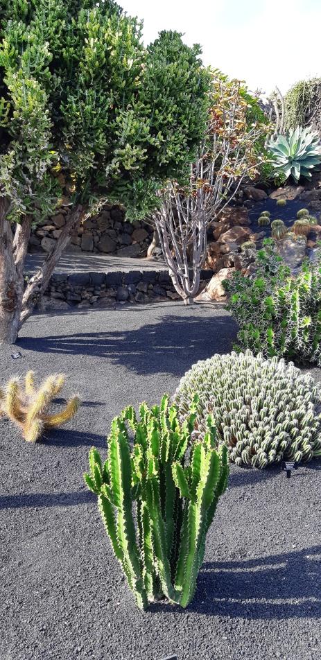Lanzarote-Jardin-de-Cactus-2