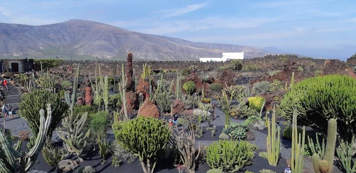 Lanzarote-Jardin-de-Cactus-3