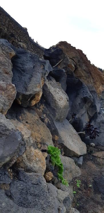 Lanzarote-Jardin-de-Cactus-4