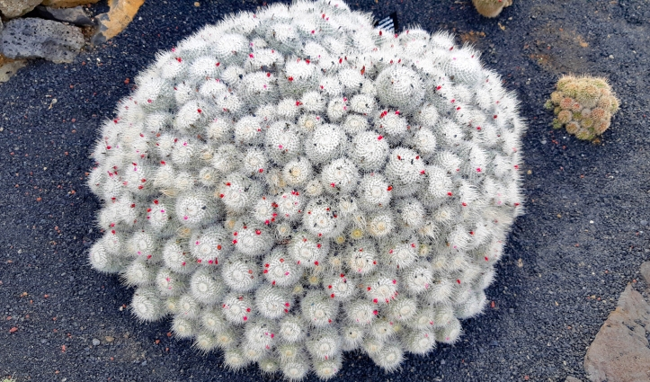 Lanzarote- Jardin-de- Cactus- 5