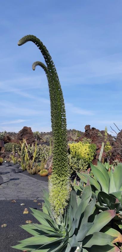 Lanzarote-Jardin-de-Cactus-9