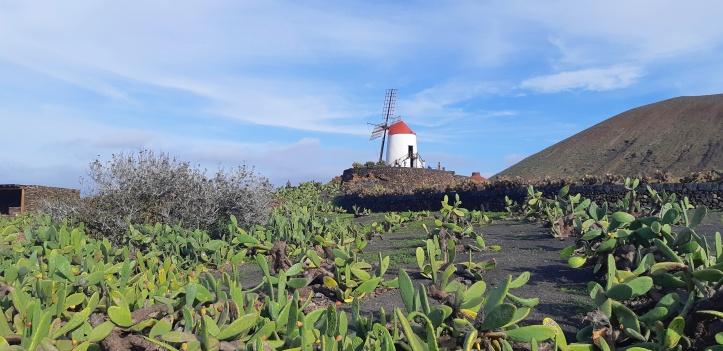 Lanzarote-piantagioni-cactus