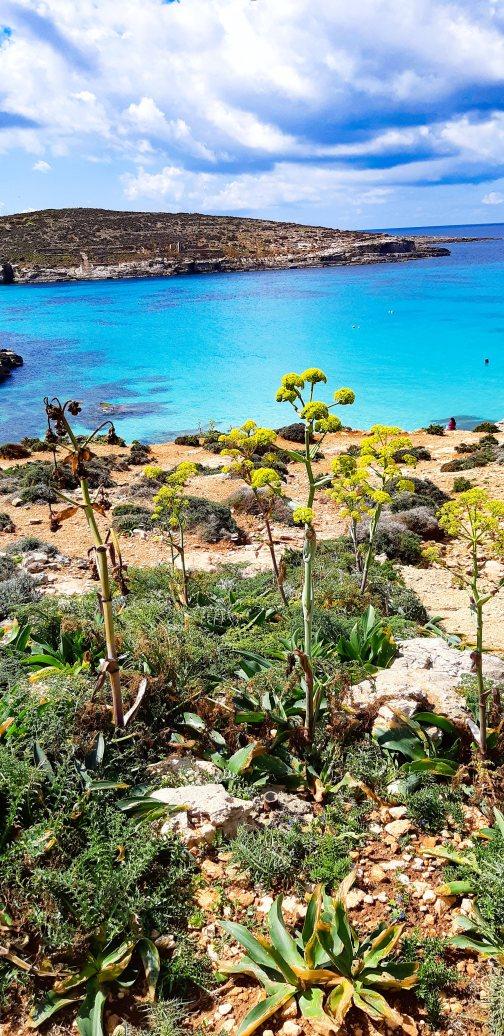 Blue Lagoon COMINO _Malta