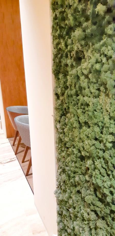 pareti licheni stabilizzati