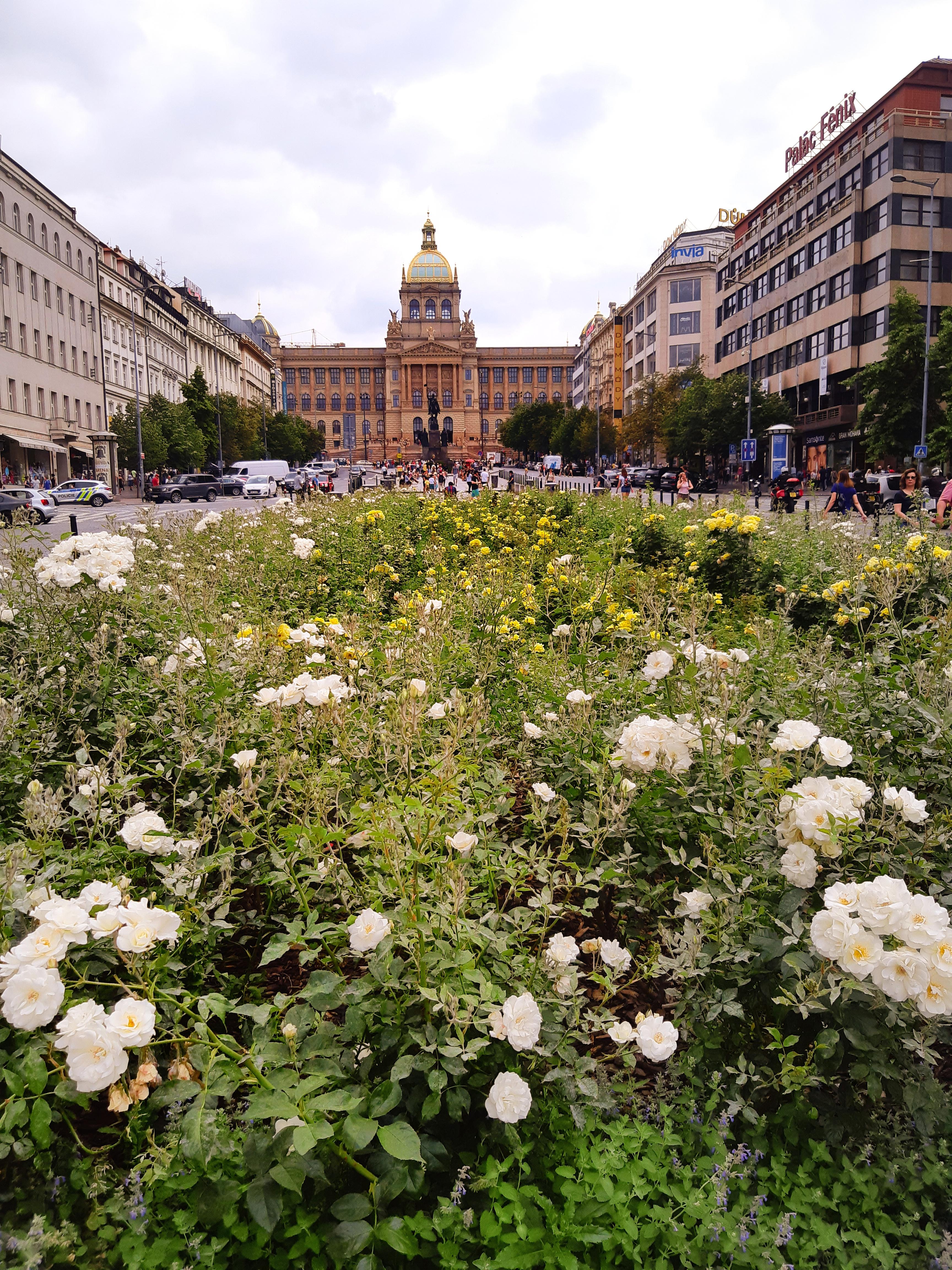 Piazza Venceslao Praga.jpeg