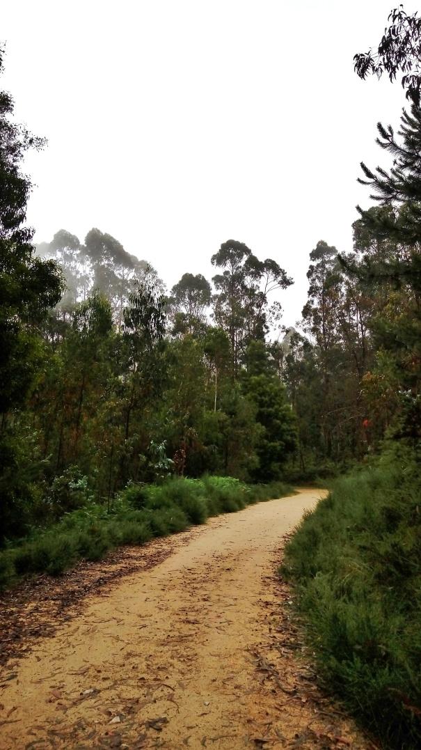 Cammino portoghese Porto Santiago - boschi nella nebbia