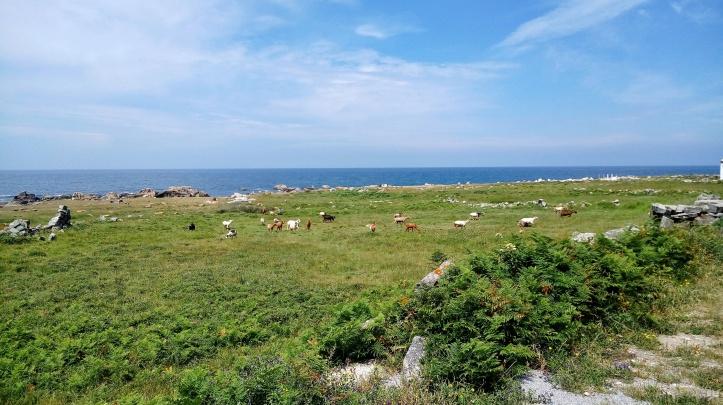 Cammino portoghese Porto Santiago lungo la costa